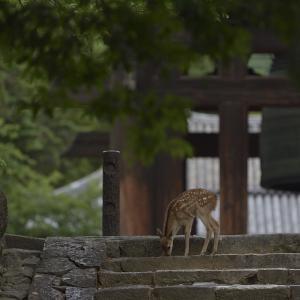 子鹿と大鐘