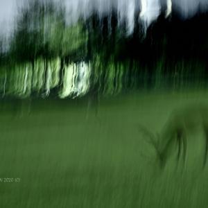 心象への扉-2 @ 夜の鹿
