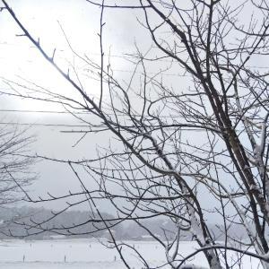 原村に2度目の雪〜さて今日は何をした?