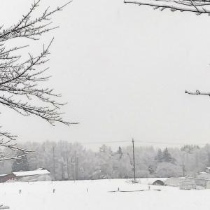 七草の日〜原村は又もや雪が落ちてきて!