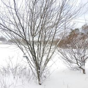 原村の朝は吹雪の中〜雪は風に飛ばされた?