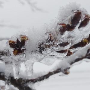雪の原村はキラキラ〜積もりましたあ!