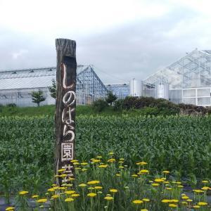 原村のトウモロコシの季節はもう少しだあ〜