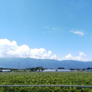 夏だあ〜青空だあ〜トウモロコシだあ〜♪