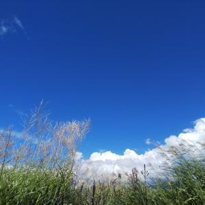 これぞ原村〜ススキにガマに大きい空に