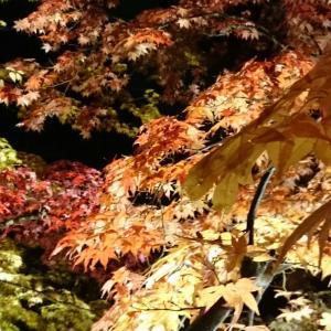 蓼科湖の紅葉ライトアップ