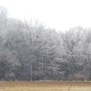 霧氷の朝〜氷点下から始まった12月