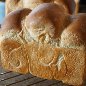 この夏 日本行きキャンセル と リベンジ食パンを焼く と息子のこと