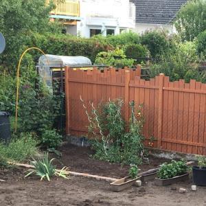 家庭菜園の最後 と ペン類の整理