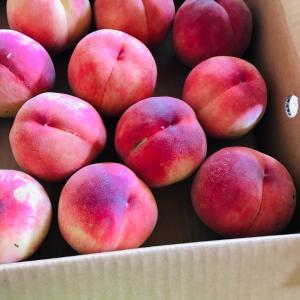 福島の美味しい桃!