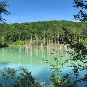 北海道上川郡美瑛町「青い池」