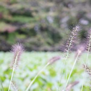 菊名池に写真撮りに