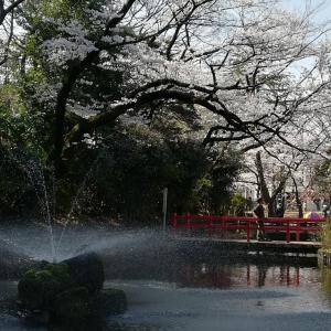 与野公園(3/31)