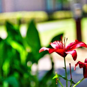 花の写真(^_-)-☆