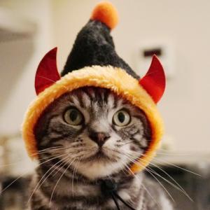 ハロウィン・チャレンジと猫