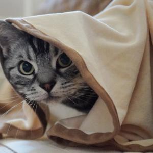 小春日和の午後の猫