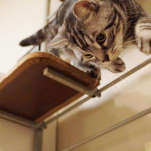 ブランケット追加と猫