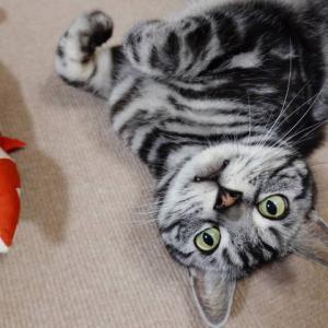 喜びの舞いと猫