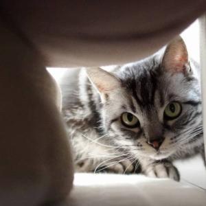 スキマスキーで鈍感な猫