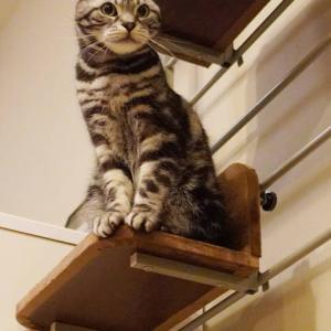 猫が飛び出す瞬間