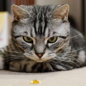 梅雨の湿気に弱い猫