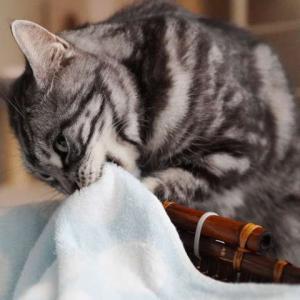 自分で歯磨きが出来るようになった?猫