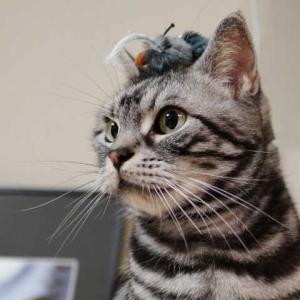 とことん意固地な猫