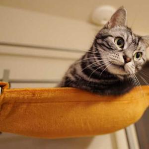 ハンモックの上で戦う猫