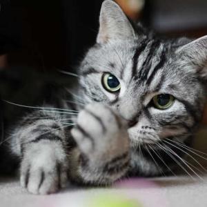分厚い靴下と猫キック