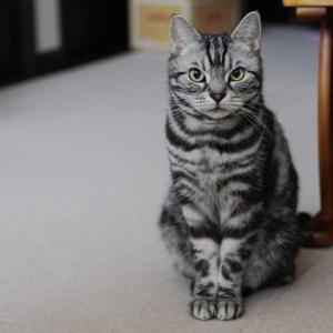 ちんまりが似合う猫