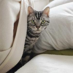 ビビリ猫、必死で窓の外を見る
