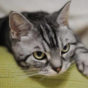ニャンモナイト初観測と猫