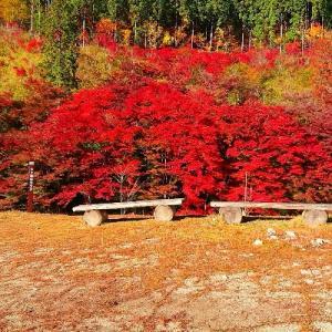 静かな紅葉