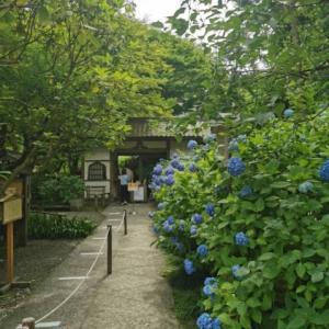紫陽花の寺 鎌倉明月院へ