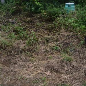 ブロッコリー定植地の準備