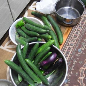 収獲野菜を消化しなければ