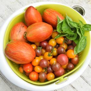 庭畑のトマト達を収獲