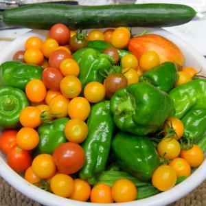 ミニトマト大量収獲と楽しみなオ・サ・毛