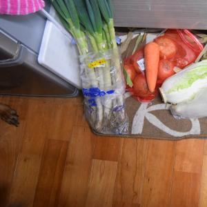 白菜とツナのパスタをチャチャッとね