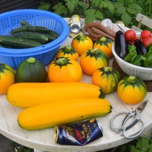 夏野菜の収穫始まってます