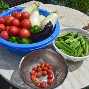 朝活、朝収穫して朝食から吞んじゃいます