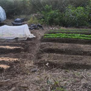 第2弾、小松菜&ほうれん草の種まき