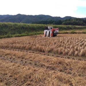 稲刈りと配達と一蘭へ
