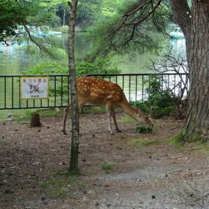 宝が池の鵞鳥と鹿