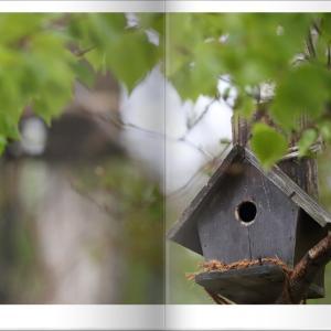 野鳥たちの営巣
