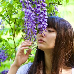 藤の花の毒