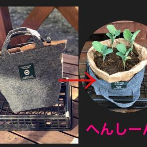 野菜を育てる土を自分で手作りするキット