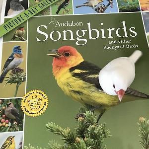 ゆらゆら色いろーAudubon Songbirds Calender 2021