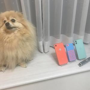 モコパパの新しいiPhone