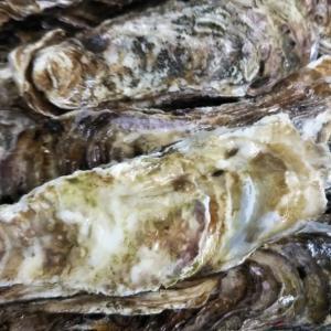 牡蠣のフルコース